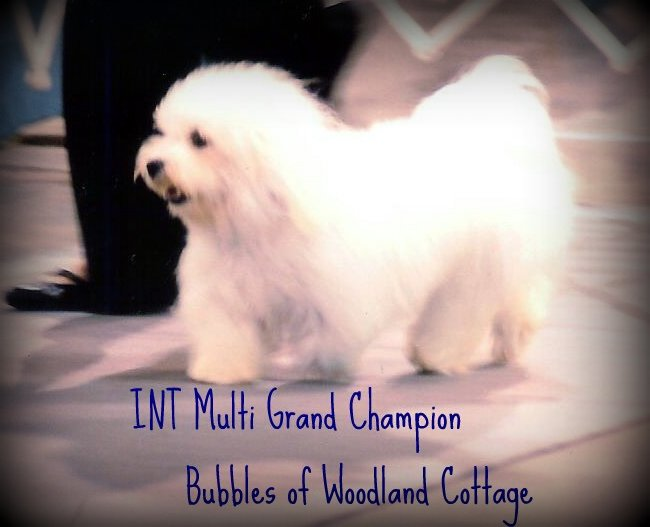Multi Grand Champion Bubbles of Woodland Cottage